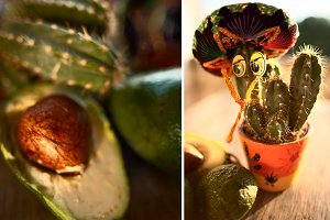 Cactus in sombrero and avocado
