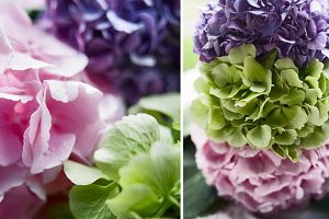 Pink, blue and green hydrangeas.