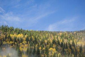 Autumn forest on a hillside