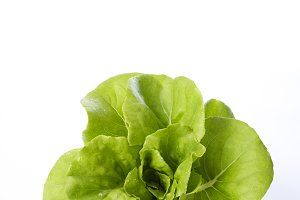 butterhead lettuce on a white backgr