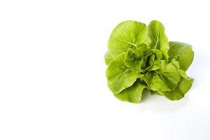 butterhead lettuce on a white backgr