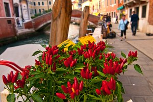 Venice 253.jpg