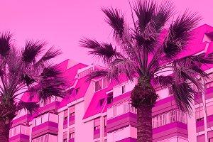 Palm pink  tropical minimal backgrou