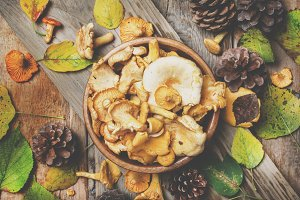 Forest mushrooms chanterelle in a bo
