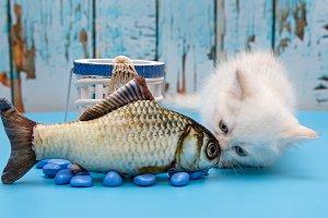 White British kitten and fish