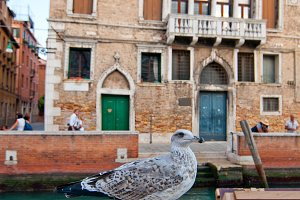 Venice 681.jpg