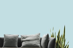 Sofa and snake plant in living room