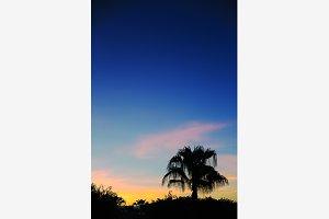 Lonely palm tree & twilight sky