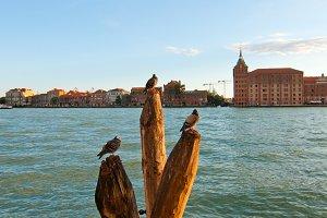Venice 945.jpg