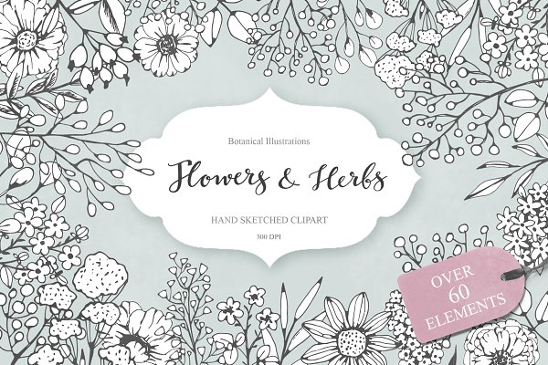 Illustrations and Illustration Products - Flowers and Herbs