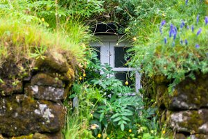 Window of Overgrown Icelandic House