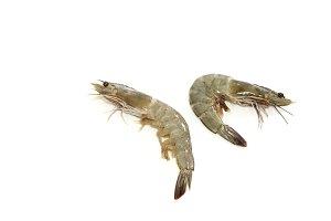 raw shrimps on white background