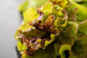 Fresh leaves lettuce for salad on a