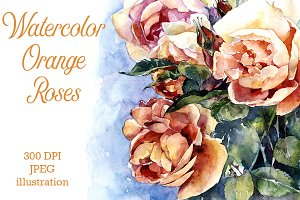 Watercolor orange roses illustration