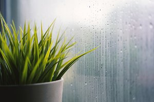 Plant pot near window with rain
