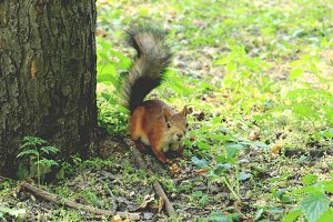 Park forest brown squirrel near tree