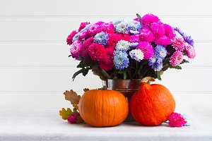 fall chrysanthemum flowers