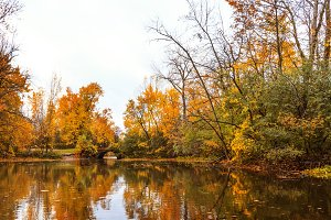 Colorful autumn with maple trees
