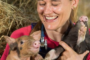 Veterinary with two pigs