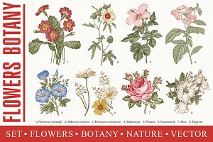 Set Flowers Botany Nature Vintage