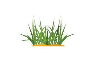 Bunches of green grass on an earthen