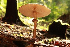 Mr.Mushroom 2