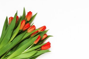 Big bouquet of fresh red tulips, iso