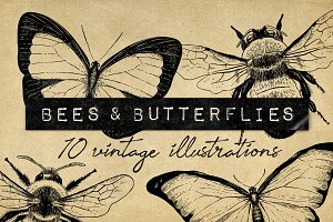 Vintage Bee Butterfly Illustrations