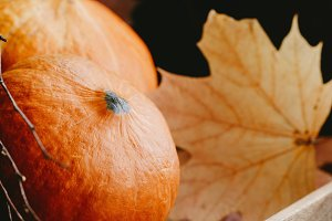 Small pumpkins and dried fall leaves
