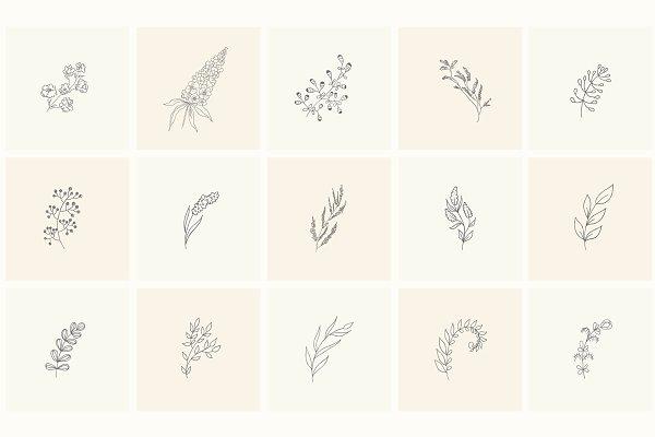 Hand Drawn Floral Elements. Frames