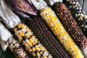 Extreme Closeup Of Indian Corn