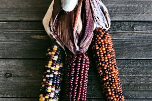 Colorful Indian Dried Corn
