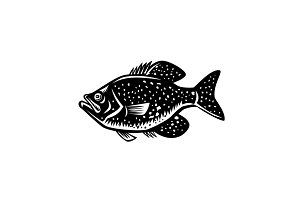 Crappie Fish Woodcut