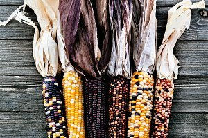Dried Multicolored Indian Corn