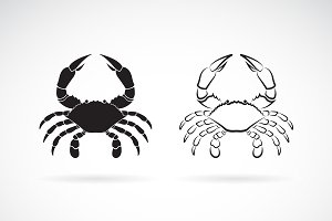 Vector of two crab. Sea creature.