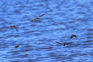 birds fly over water