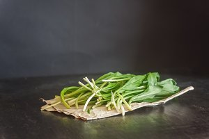 Fresh ramson wild garlic, green spro