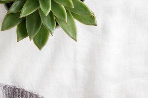 Succulent plant on white linen