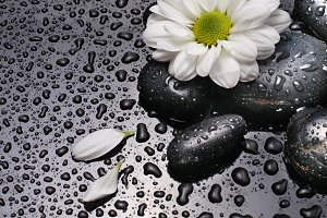 black stones and flower with drops