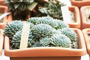 House Plant Succulent Photo