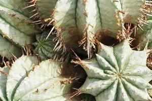Cacti Photo Background