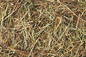 Farm hay texture. Dried grass.