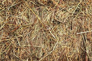 Hay texture. Dried grass agricultura