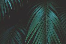 Tropical Palm Leaves Portrait by  in Nature