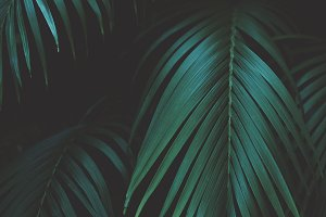Tropical Palm Leaves Portrait