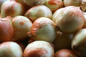 Onion closeup