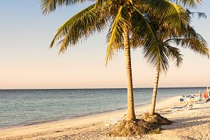 Palm trees on the beach of a tropica