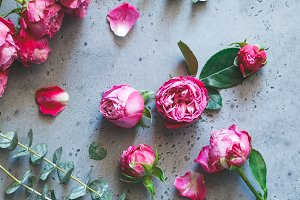 Pink roses on a grey background