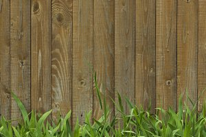 Grass on a background of fence