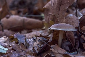 Brown mushroom in autumn forest
